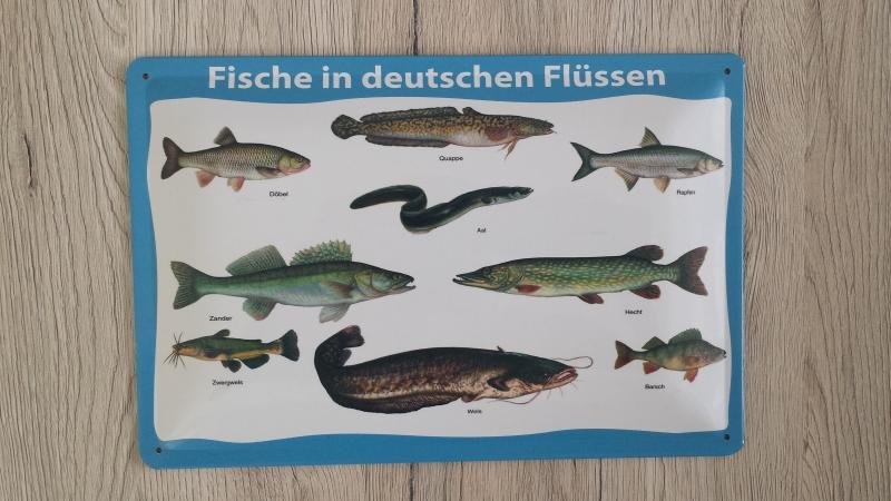 Fische in deutschen Flüssen - Blechschild