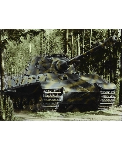 Königstiger - Kunstdruck - Poster - 60,0 x 45,0 cm